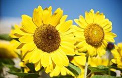 """另类角度克服""""赢一把就去睡觉""""困局,拥抱阳光和花香"""